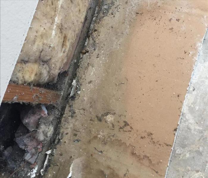 Mold damage found inside the walls of a home