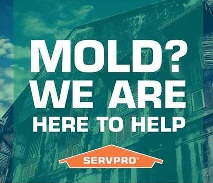 Mold Remediation Watch out for that Mold !