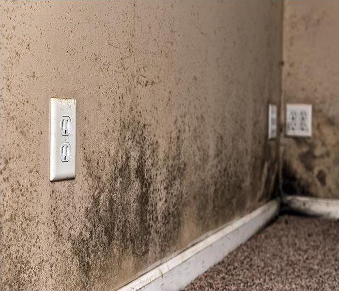 Mold Remediation Never Worry About Mold Again With Help From Our Professional Remediation Team In Santa Ana