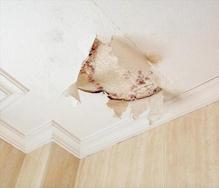 Mold Remediation What to Avoid When Dealing With Mold Damage in Your Santa Ana Home